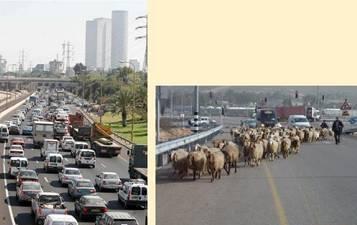 Traffic Jam Tel Aviv Shomron