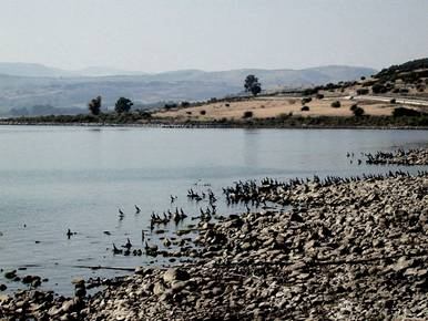 Parched Shoreline of the Sea of Galilee