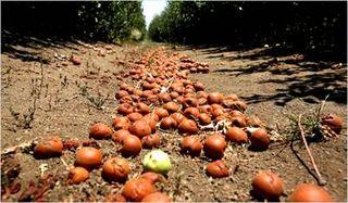 Saving Apple Trees