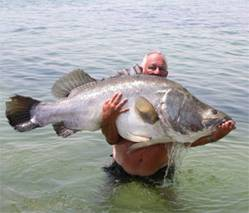 Nile Perch from Lake Nasser