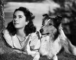 Elizabeth Taylor - Lassie Come Home