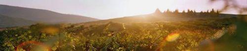 Hills near Tel Shiloh