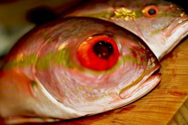 Galilean Fish Eye Popping Disease