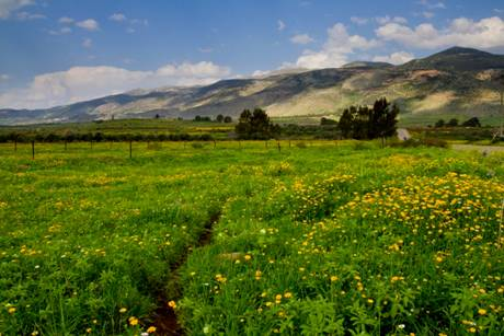 Plains of the Jezreel Valley