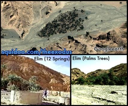 Oasis of Elim
