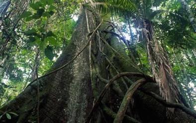 New South Pole in Amazon River Jungle