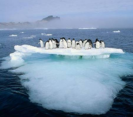 Shrinking Ice World of the Antarctica