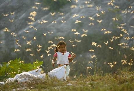 Locust Plague in Egypt