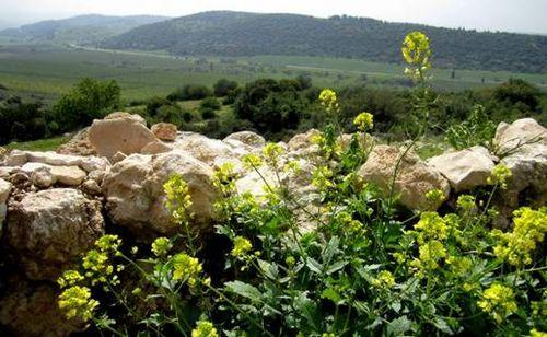 Khirbet Qeiyafa looking over Valley Elah