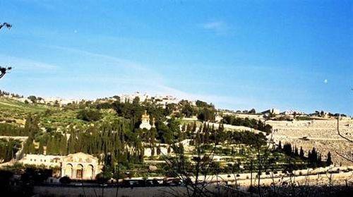 Forested Mount Olives Easter Gate Temple Mount