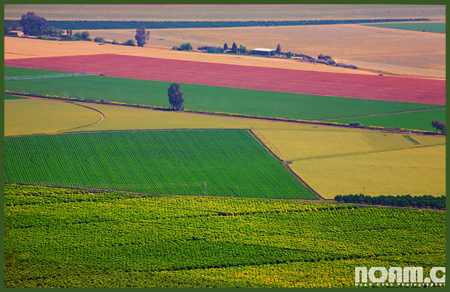 Agricultural Land in the Hula Valley in Israel