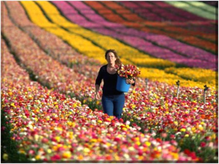 Spring has sprung at Israel's Kibbutz Nir Yitzhak along the Israeli-Gaza Strip