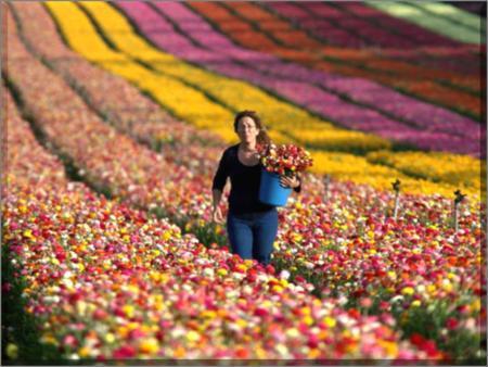 Spring has sprung at Israel's Kibbutz Nir Yitzhak along the Israeli-Gaza Strip