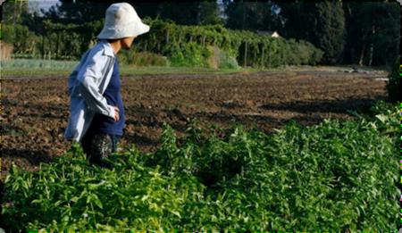 Jewish Farmer at Kfar Yehoshua in the Shmittah Year