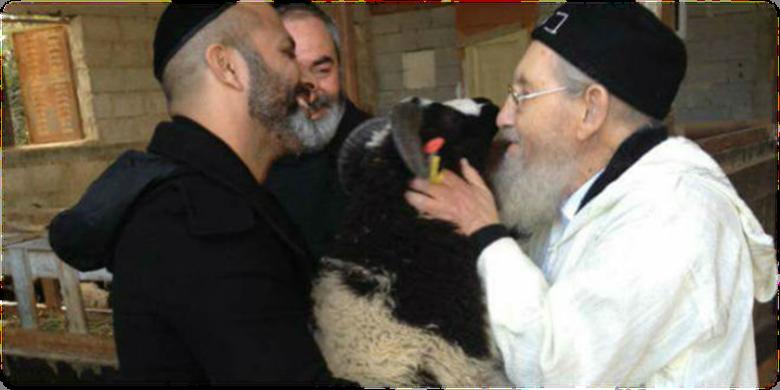 Israeli mystic Rav Amram Vakhnin kissed and blessed Jacob's Sheep